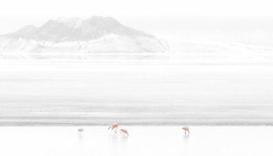 Flamingos in der Lagune Surire